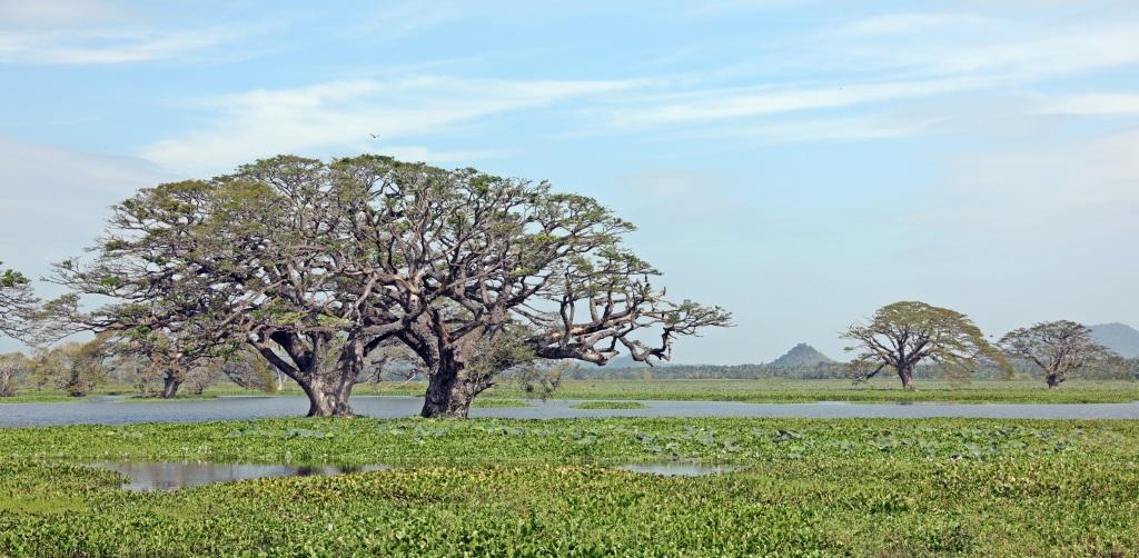 Tissa Wewa Lake, Tissamaharanna