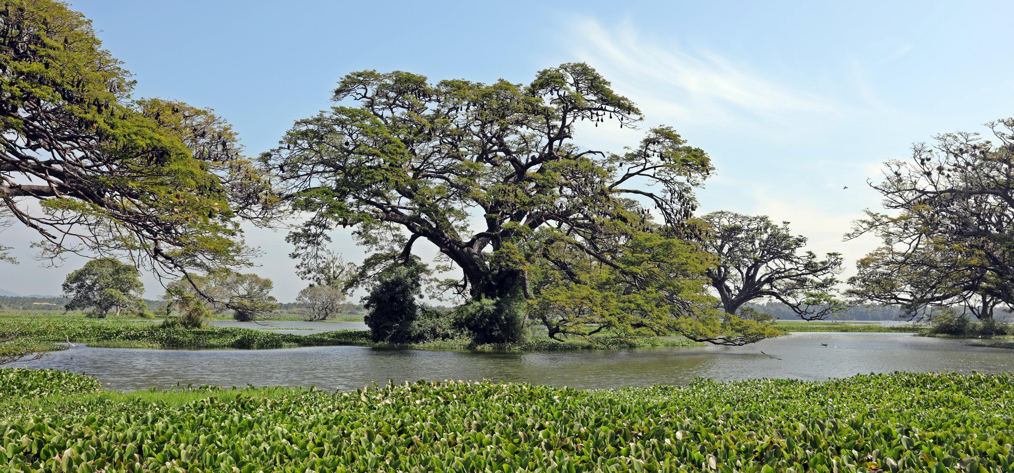 Tissa Wewa Lake, Tissamaharama, Sri Lanka