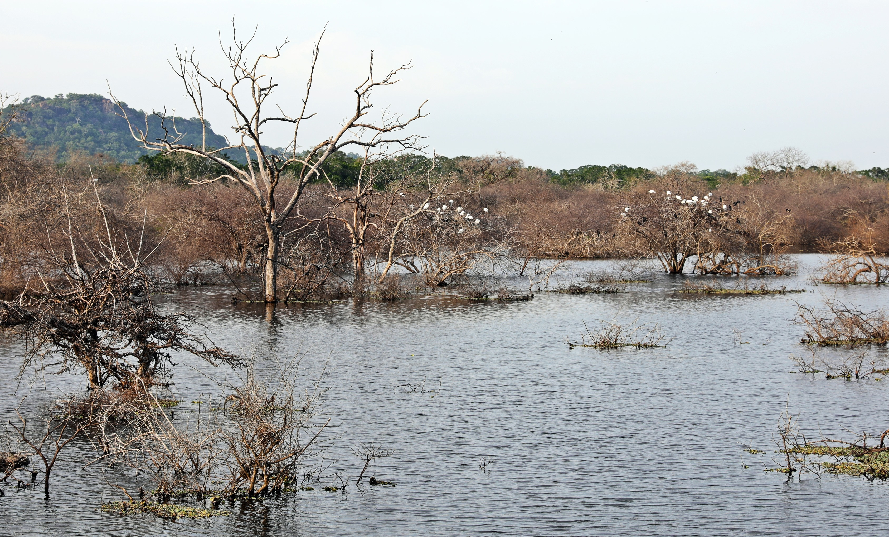 Lagoon with many water birds, Yala National Park