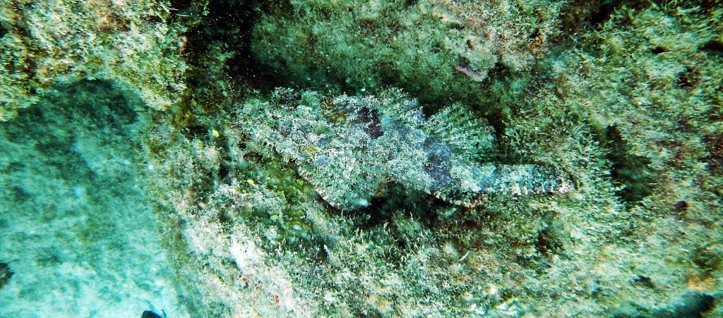 Look closely for the Scorpion Fish, Andaman Islands