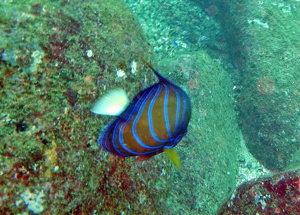 Reef fish, Hikkaduwa