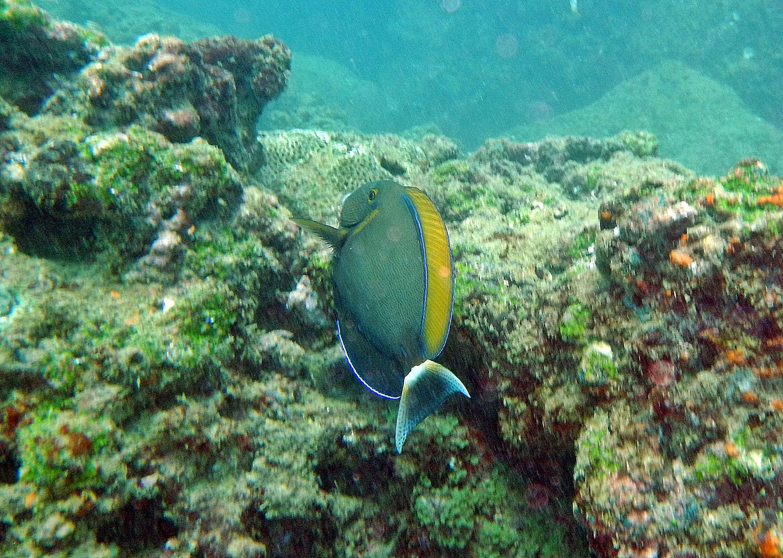 Reef fish, Hikkaduwa
