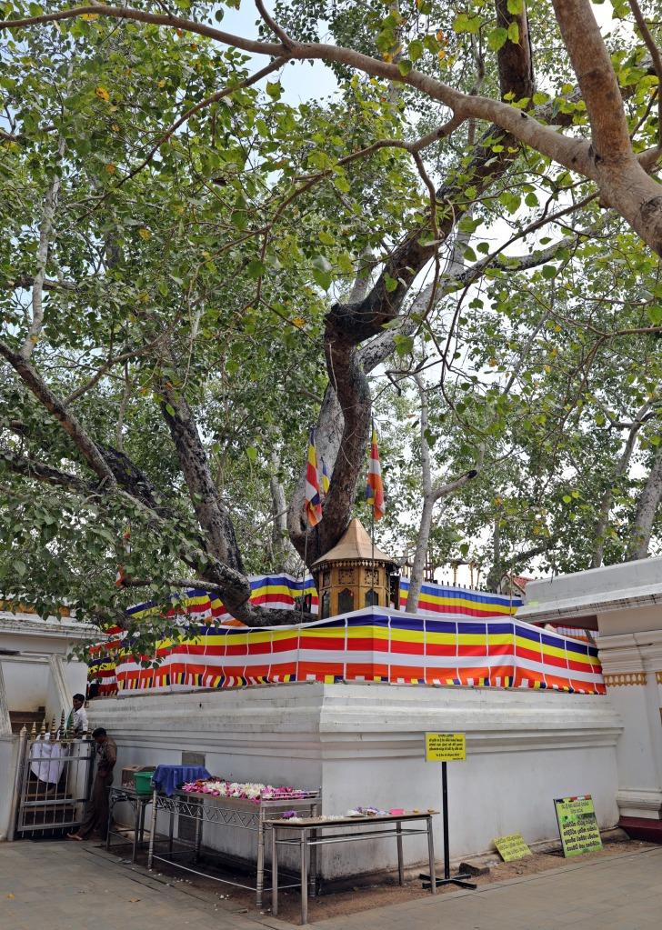 Sri Maha Bodhi Temple, Anuradhapura