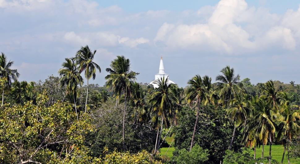 Dagoba behind palm trees, Anuradhapura