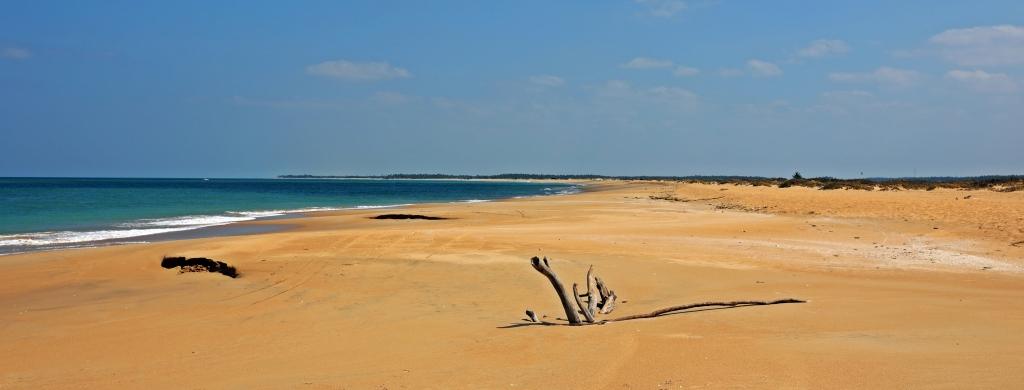 Driftwood, Kalpitiya Beach