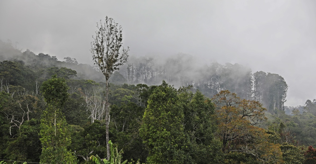 Cloud Forest, Haputale