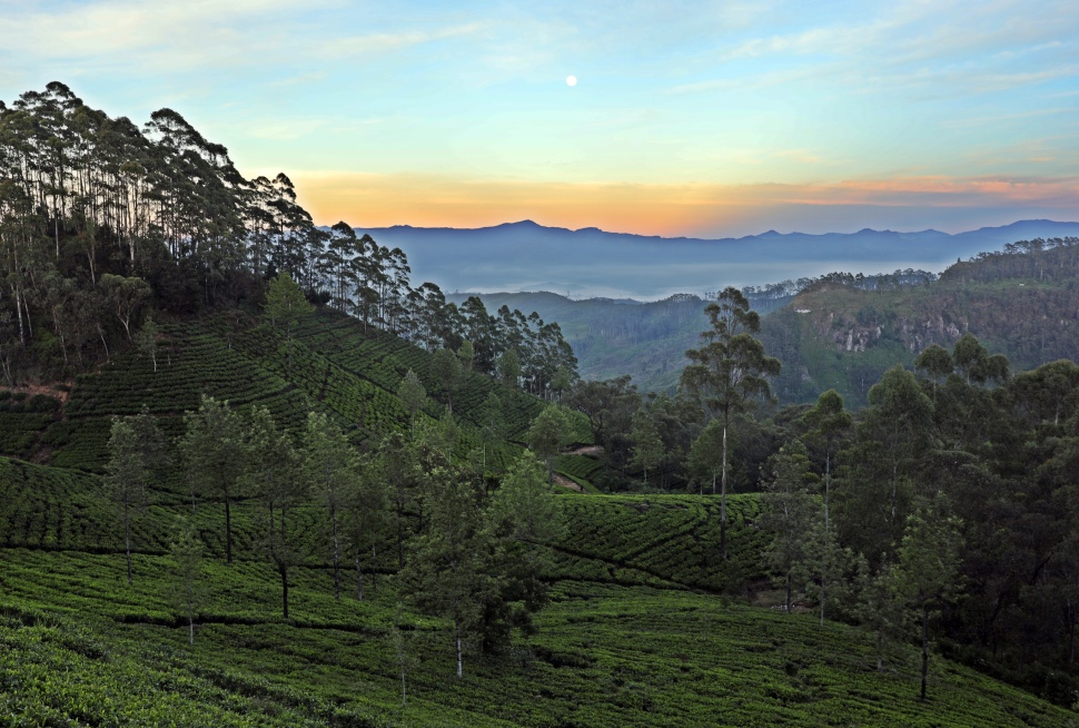 Sunrise from Lipton's Seat, Sri Lanka
