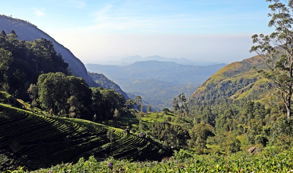 View from Dambatenne Tea Factory, Sri Lanka