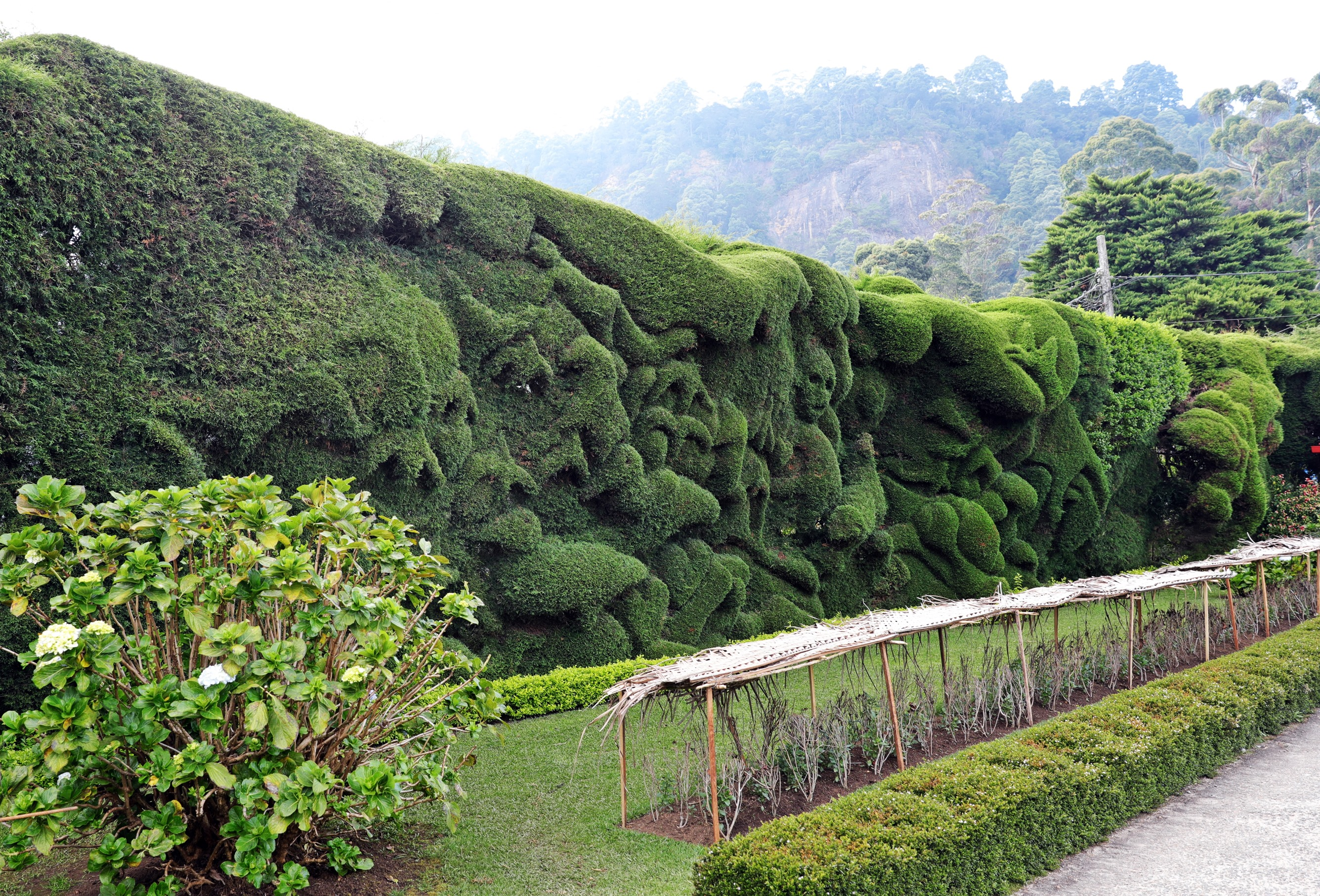 Edward Scizzorhands hedges, Grand Hotel, Nuwara Eliya