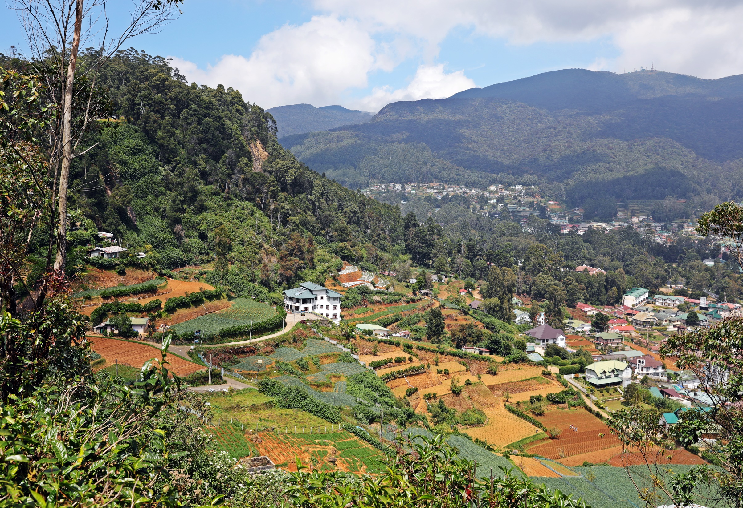 View of Nuwara Eliya from Single Tree Trek