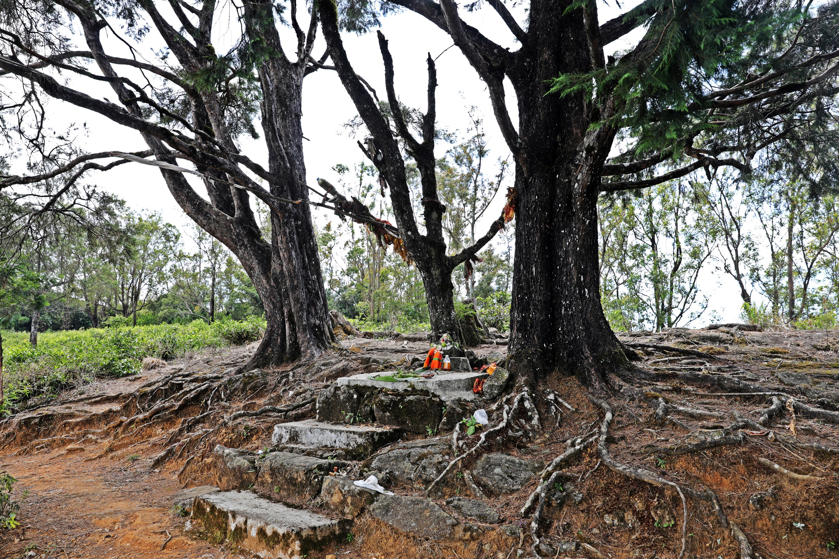 Forest temple, Nuwara Eliya