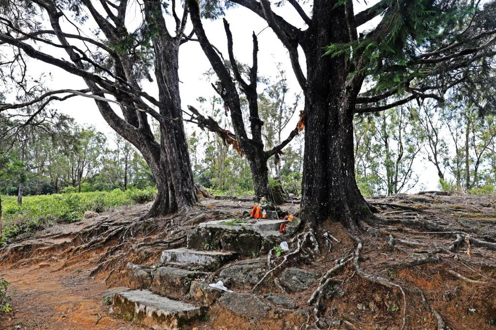 Forest temple, Nuwara Eliya