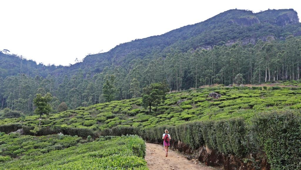 Hike to Lover's Leap Waterfall, Nuwara Eliya