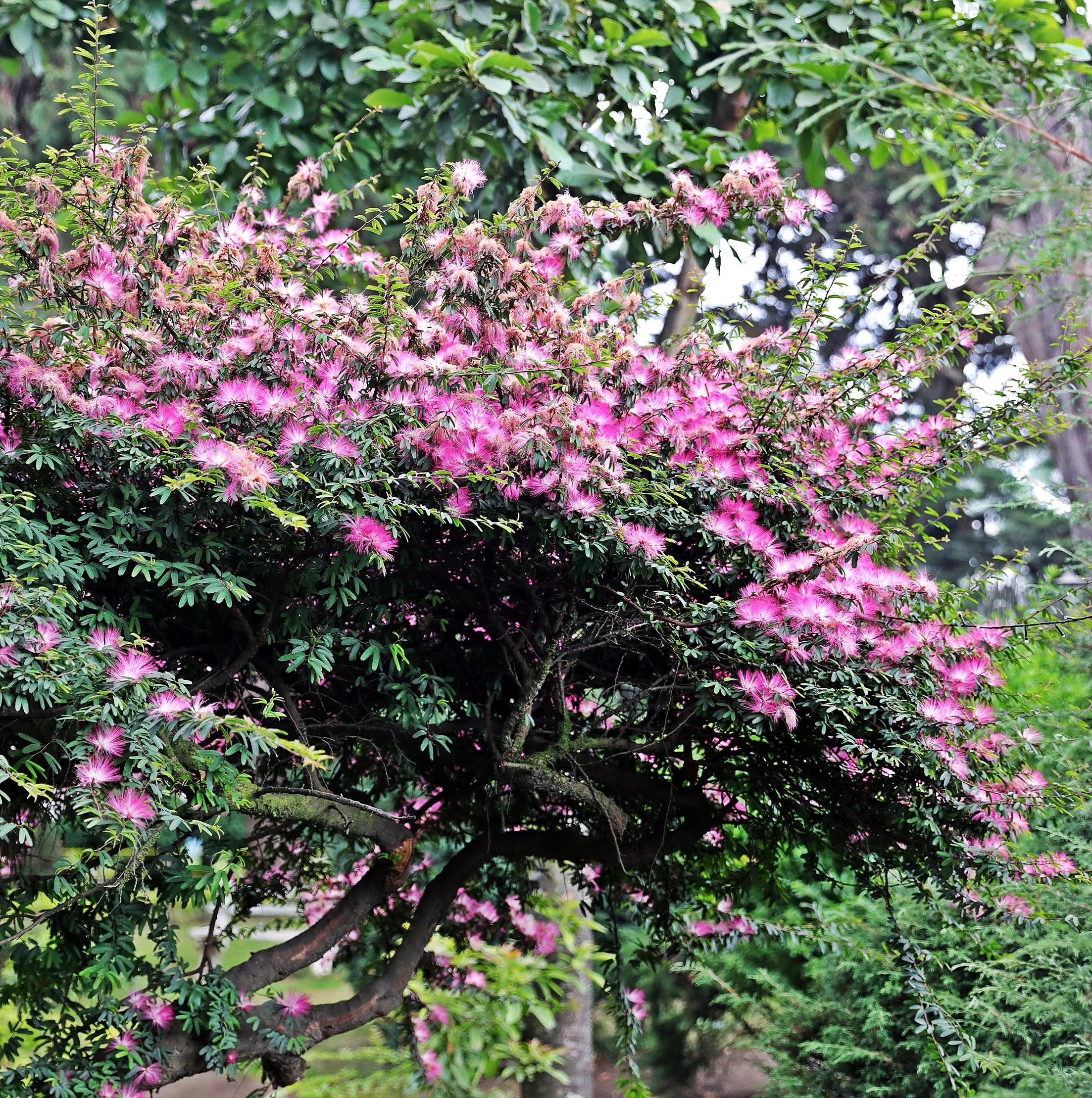 Flowers, Nuwara Eliya
