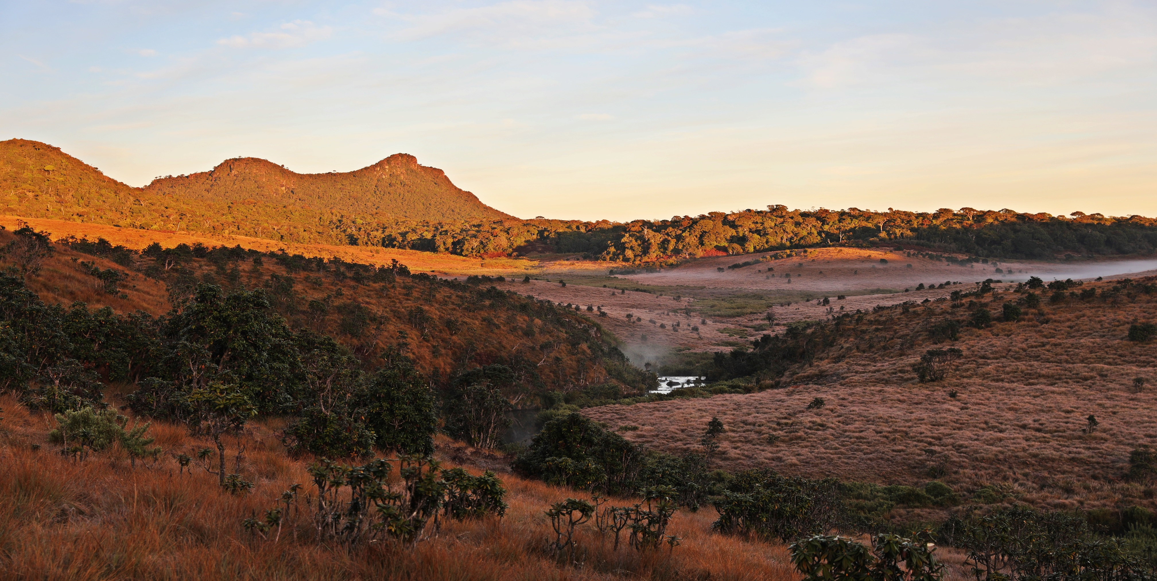Montane Grassland at sunrise, Horton Plains