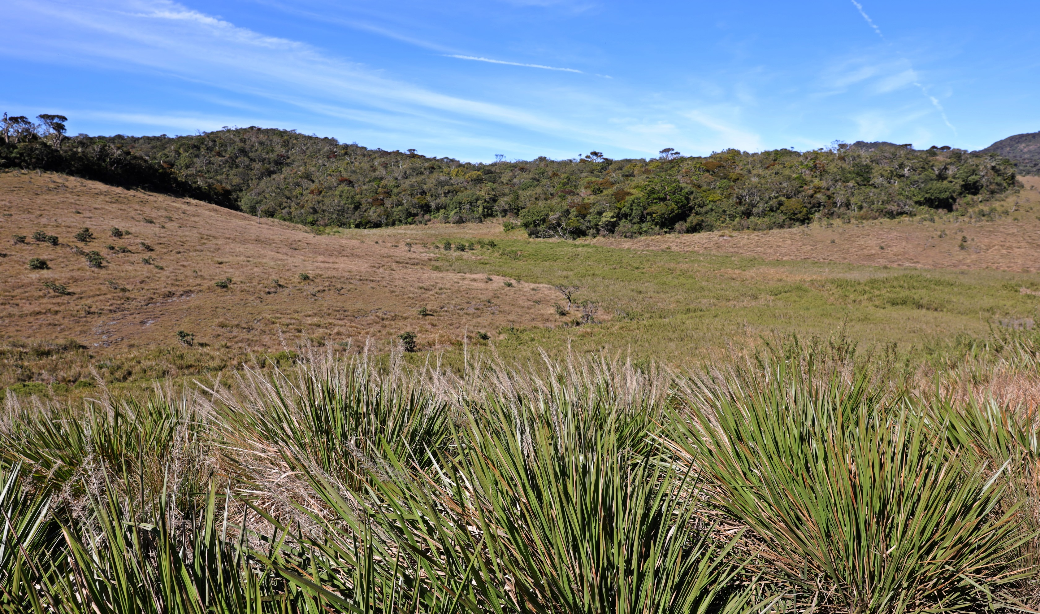Tussock Grass, Horton Plains