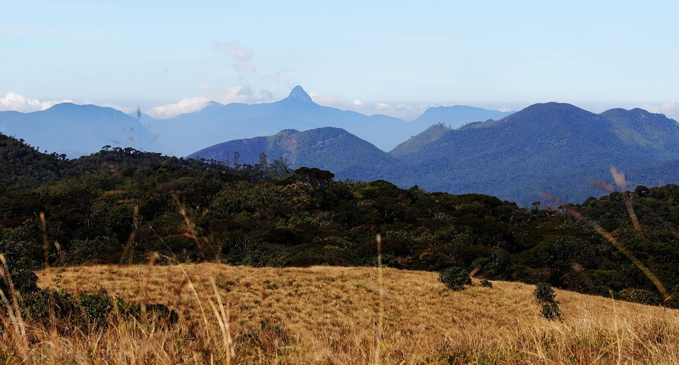 View of Adam's Peak from Horton Plains