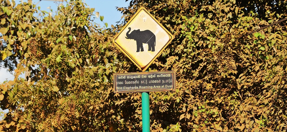 Elephant crossing sign, Sigiriya