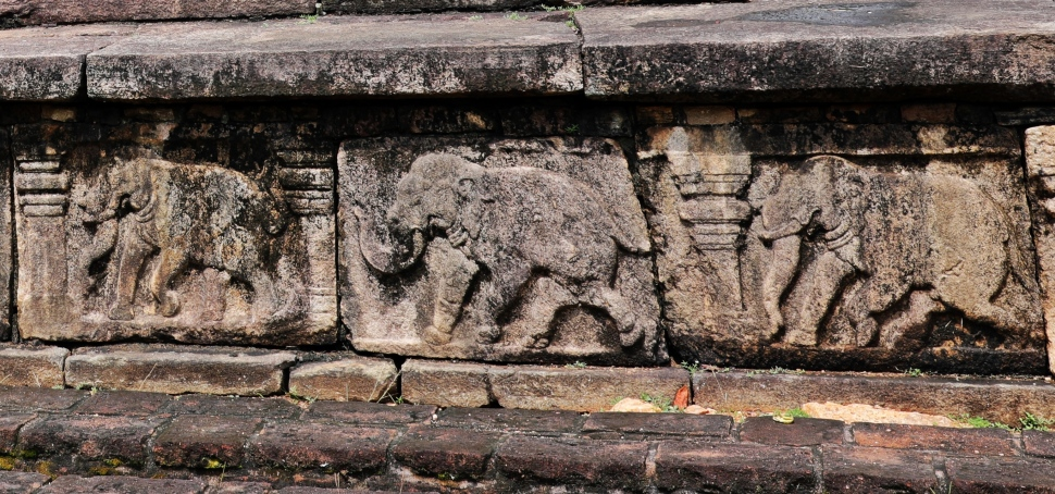 Elephant frieze on Audience Hall's outer wall, Polonnaruwa