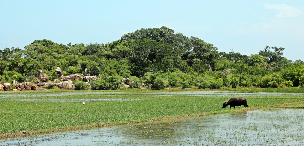 Lagoon near Arugam Bay