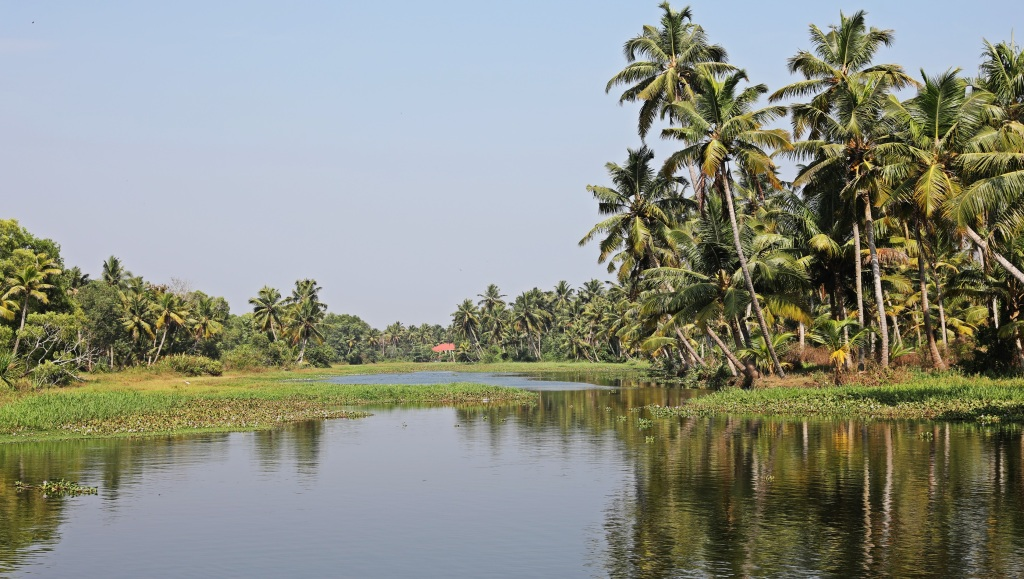 Coconut fringed canal of Kerala Backwaters
