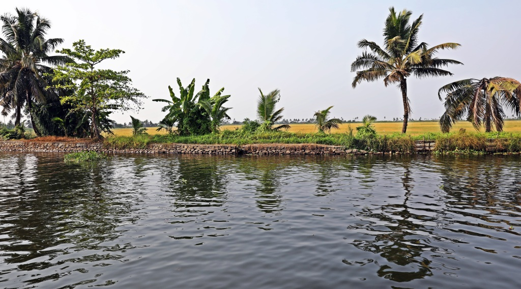 Rice field is lower than canal as water is held back by the stone wall