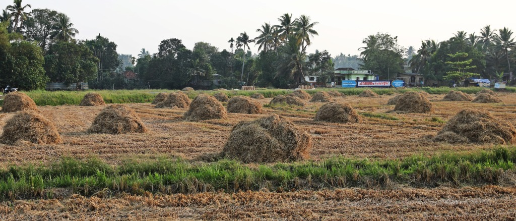 Drying rice bales, Kerala