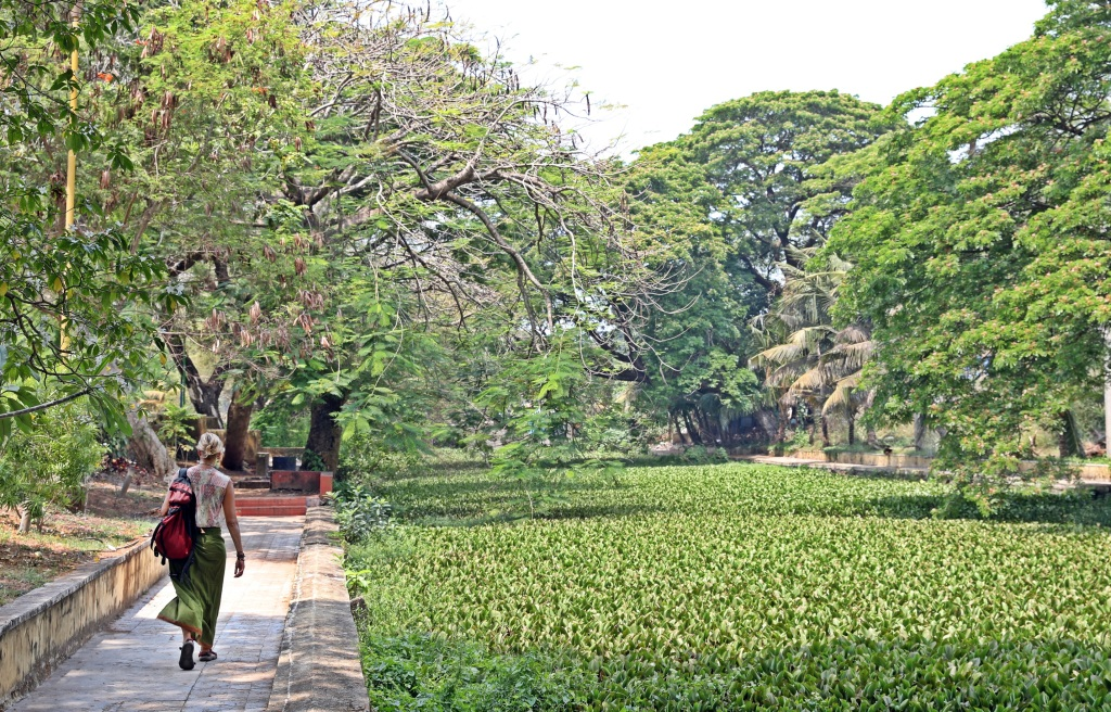 Walkway along an Alleppey canal covered in water plants
