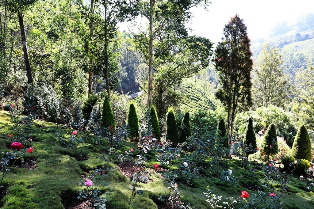 Roses, Botanical Garden, Munnar