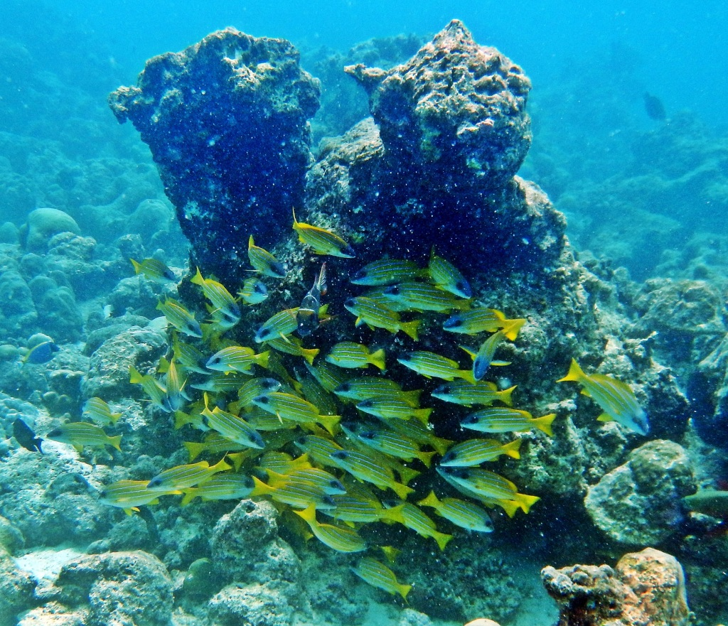 Reef fish, Maldives