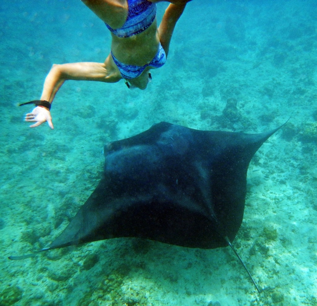Snorkeling with a Giant Oceanic Manta Ray, Maldives