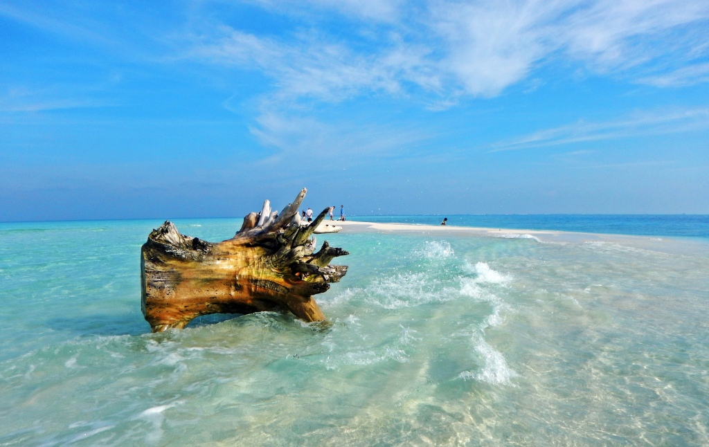 Driftwood on a sandbar, Maldives