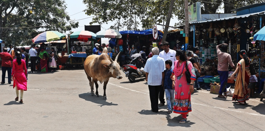 Bull outside Chamundeshwari Temple, Mysore