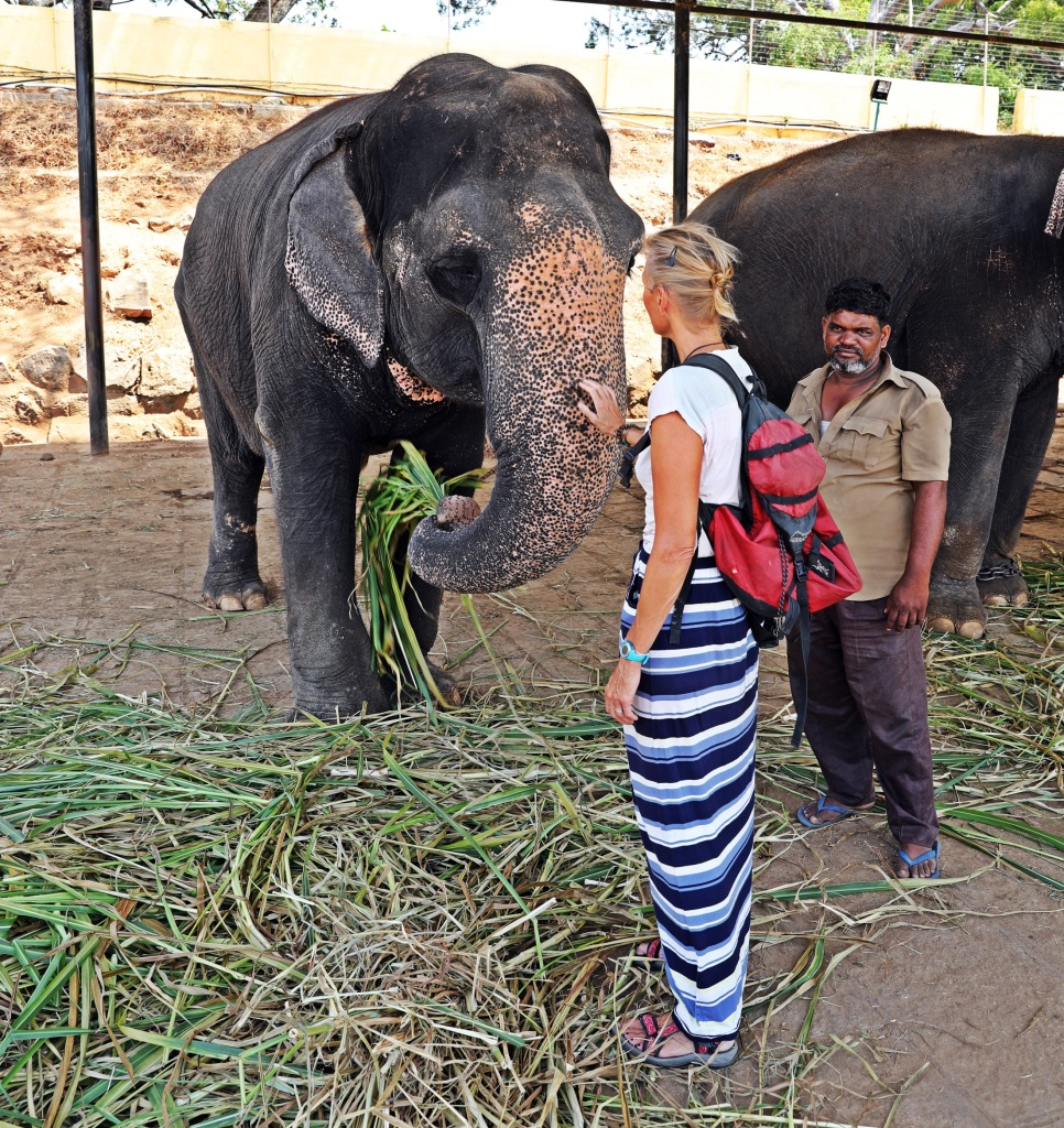 Palace Elephants with Maggie and their keeper