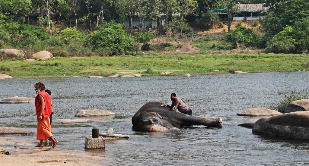 Lakshmi getting a bath in the Tungabhadra River