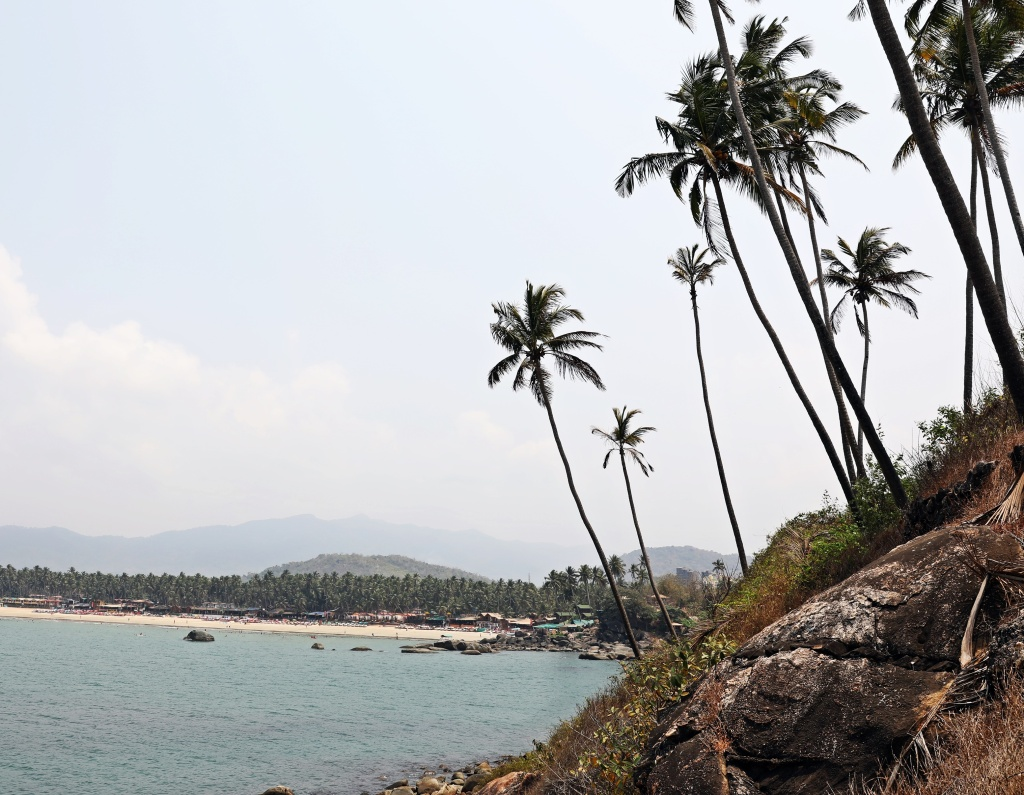 Coconut grove,Palolem Beach, Goa