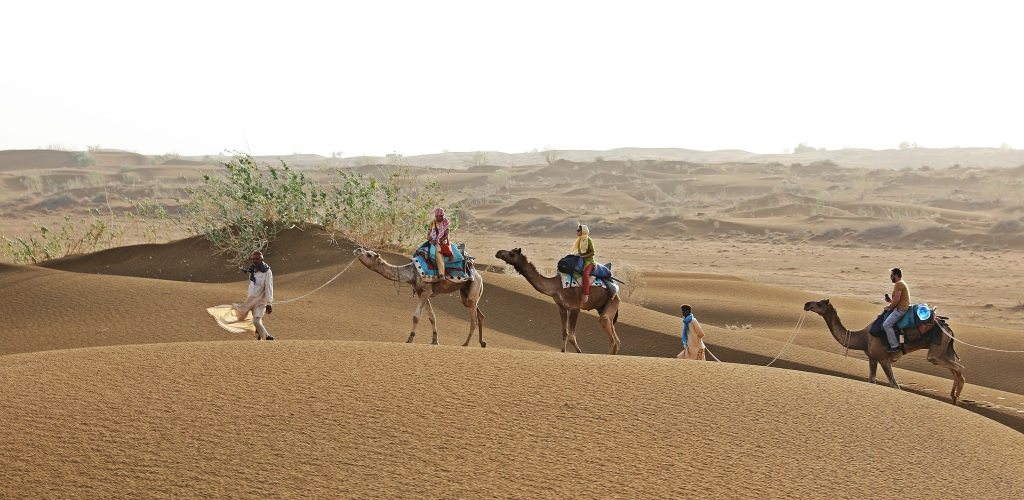 Camel train, Thar Desert