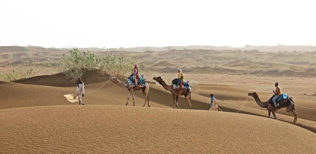 Camel train, Thar Desert