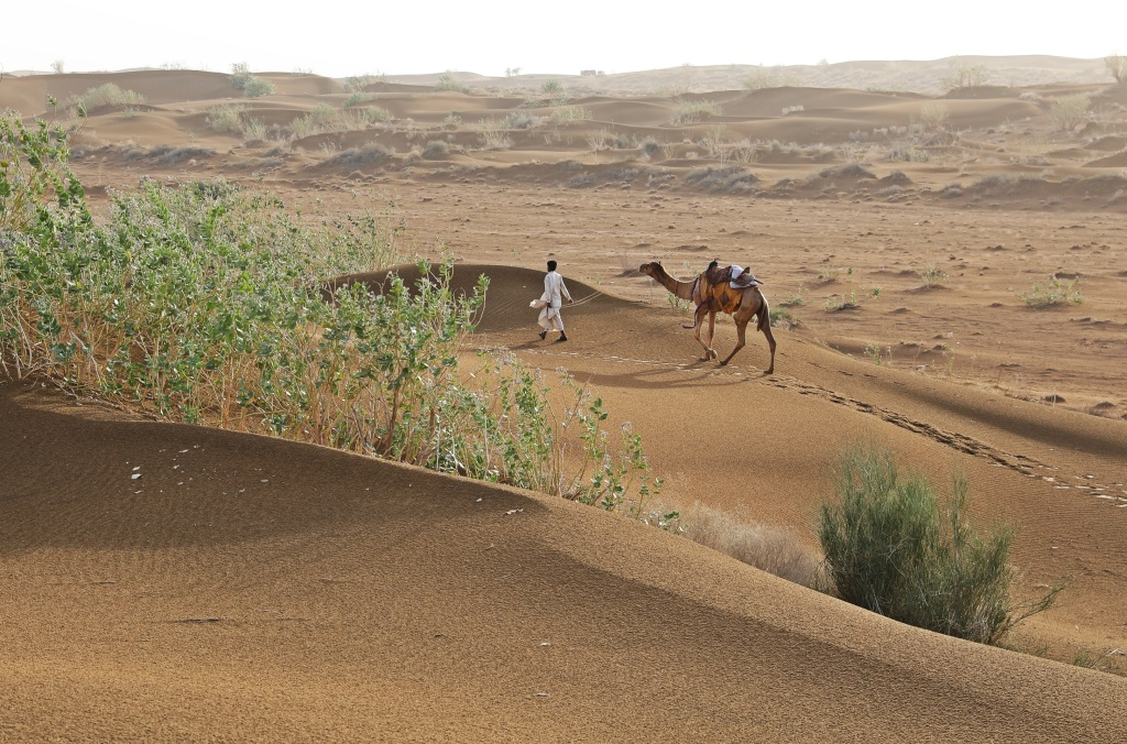 Camel herder, Thar Desert