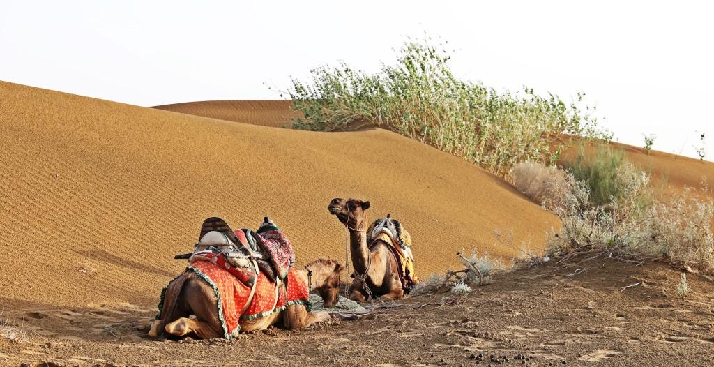 Raj and Lela having dinner, Thar Desert
