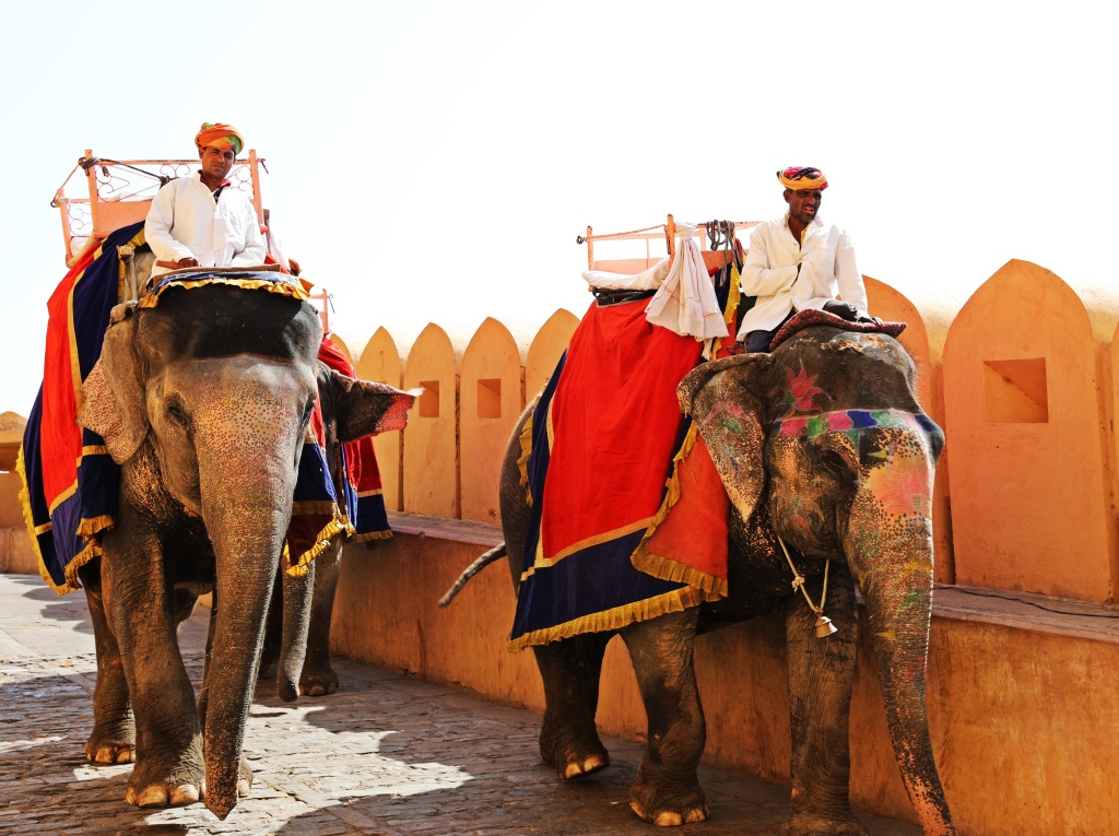 Elephants, Amer Fort