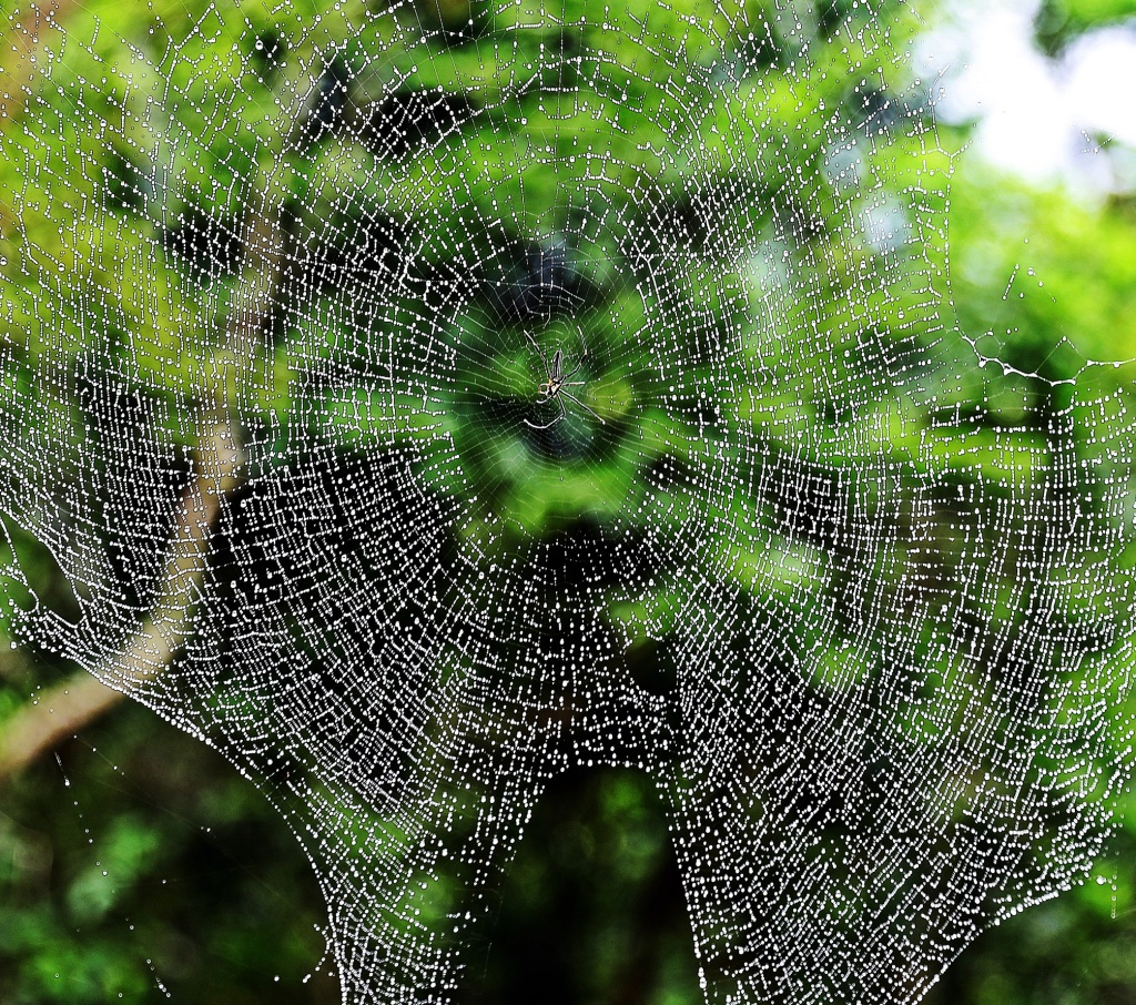 Spider in its web, Dragon's Back Trail, Hong Kong