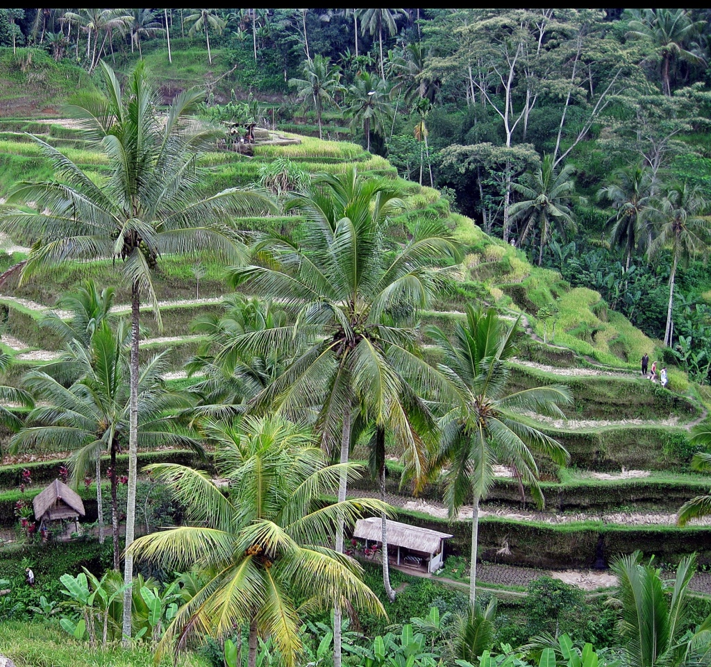 Tegalang Rice Terraces, Bali
