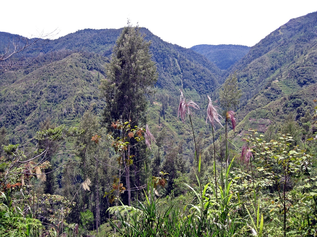Jungle, Papua Province