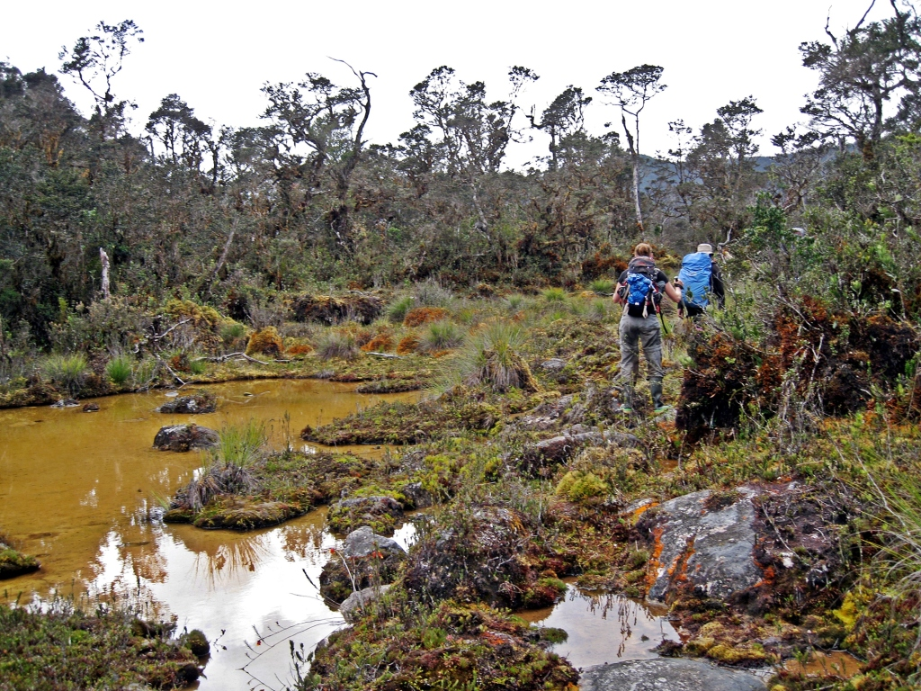 Hiking through boggy ground on the way to Carstensz Pyriamid