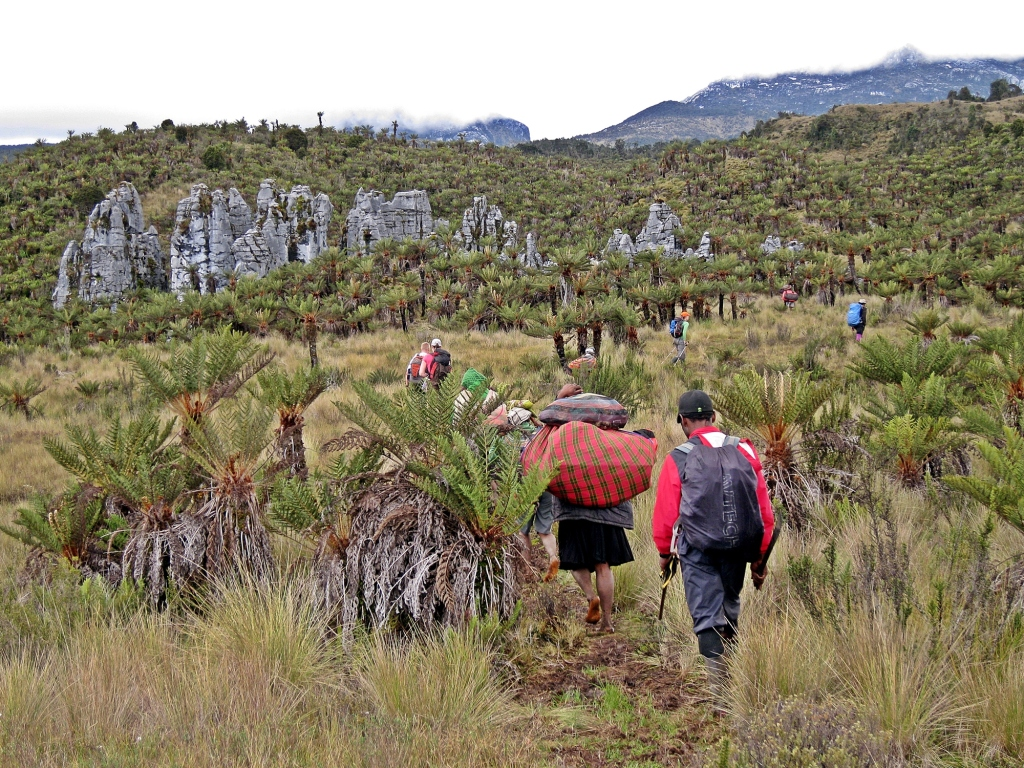 Karst pinnacles, Carstensz Pyramid Trek