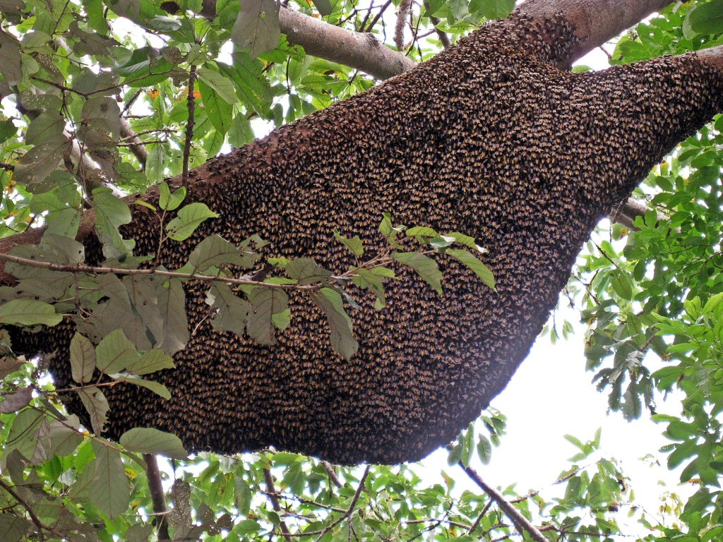 Bees, Komodo National Park