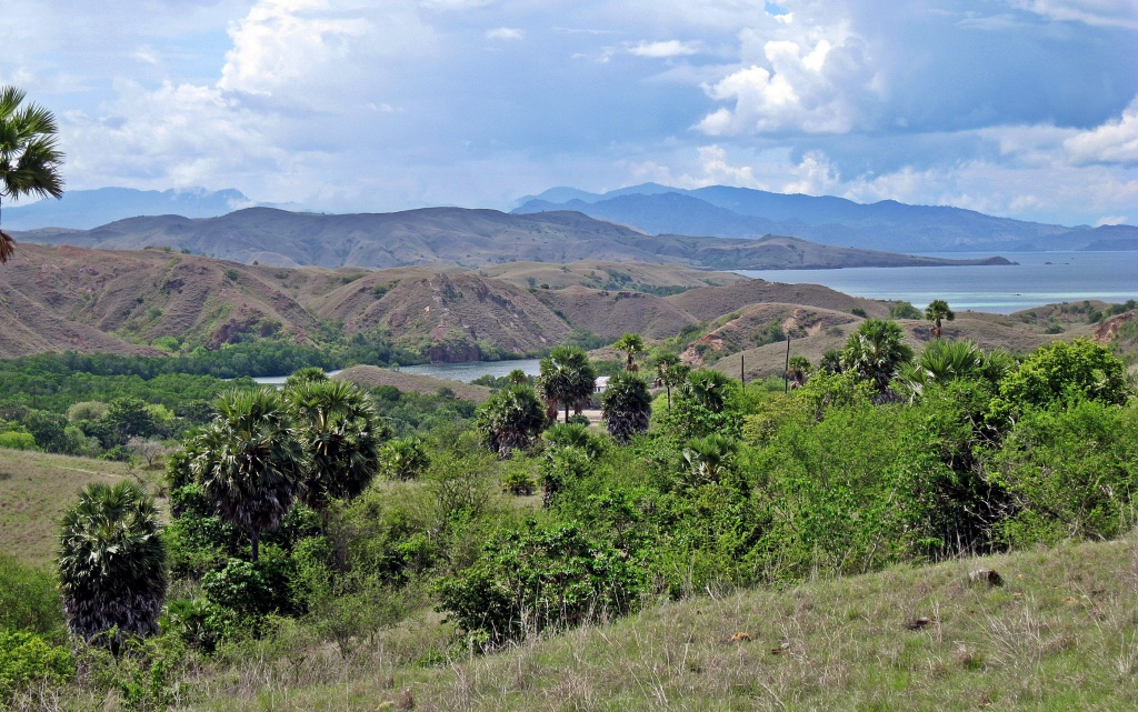 View from Komodo Island