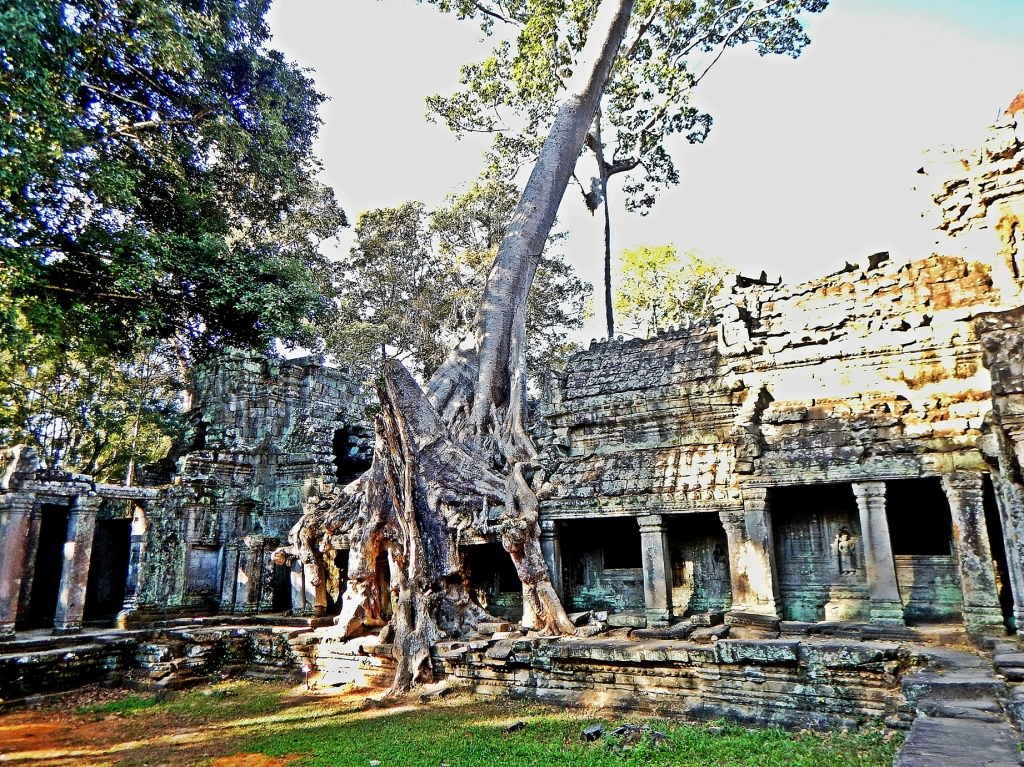 Strangler figs in Preah Khan