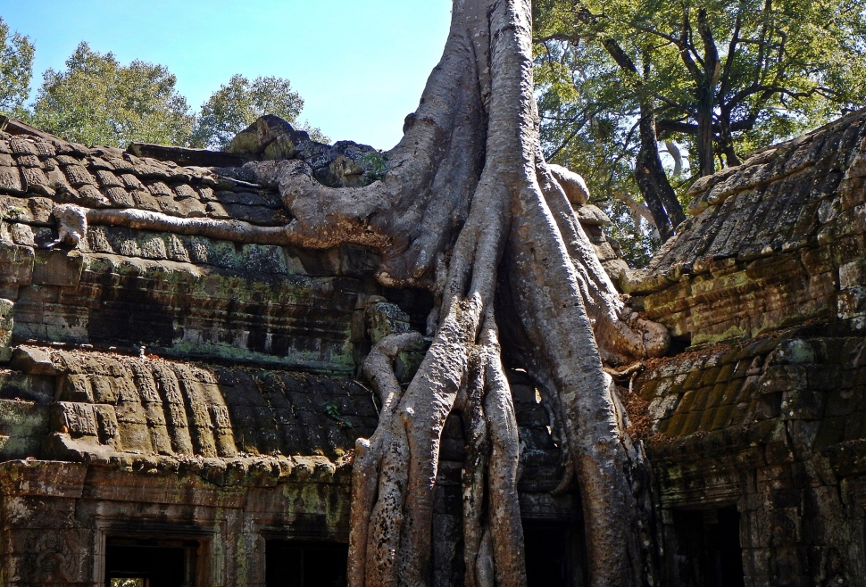 Strangler fig covering a doorway, Ta Prohm